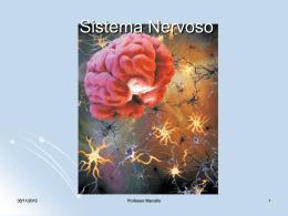 sistema nervoso 2