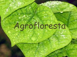 Agrofloresta Oficial
