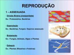 embriologia