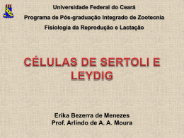 As células de Sertoli - Universidade Federal do Ceará