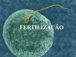3. Ligação do espermatozóide à zona pelúcida