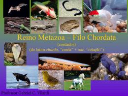 II) Subfilo Vertebrata (vertebrados)