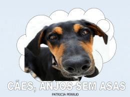 Cães anjos sem asas