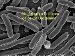 Morf_Estr_Celula_Bact