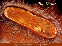 Prof. Ana Luiza Nunes – Colégio Atenas Bactérias