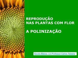 Polinização / Reprodução das PLANTAS