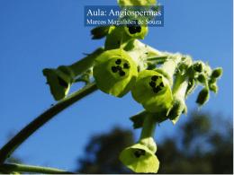185616250512_angiospermas