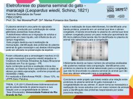 Eletroforese do plasma seminal do gato maracajá Fabricio