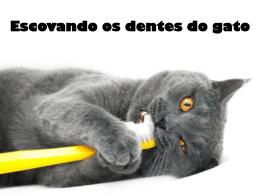 Escovando os dentes do gato - Ajudando a cuidar de quem você ama