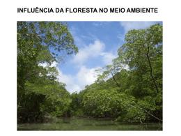 a influência das florestas sobre o vento