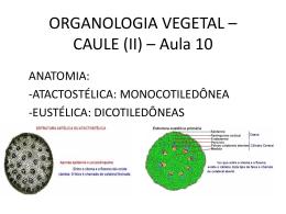 ORGANOLOGIA VEGETAL – CAULE (II) – Aula 10