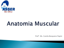 Anatomia Muscular Esquelética