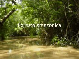 Floresta amazônica - escolafilintomuller