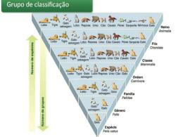 Classificação_dos_..
