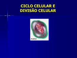Ciclo Celular e Divisão Celular (Mitose e Meiose)