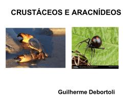 Crustáceos e Aracnideos - Colégio Machado de Assis