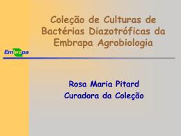5 - RosaEmbrapa_CCBD_2005
