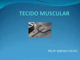 tecido muscular estriado 2014