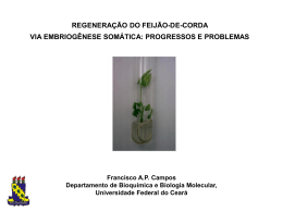 Palestra Francisco Campos