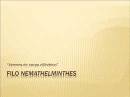 Filo nemathelminthes