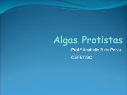 Algas Protistas - IF
