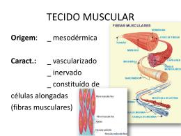 tecido muscular Turma: M3S-RQ Professor: Frederico Moreira Lara