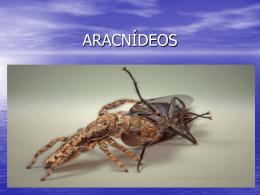 ARACNÍDEOS - Colégio Cor Jesu
