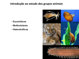2ª Série_Introdução ao Reino Animal