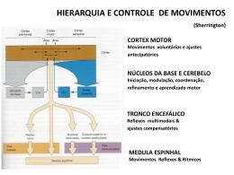 áreas motoras - (LTC) de NUTES