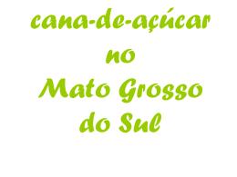 cana-de-açúcar no Mato Grosso do Sul