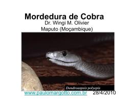 Mordedura de Cobra - Paulo Roberto Margotto