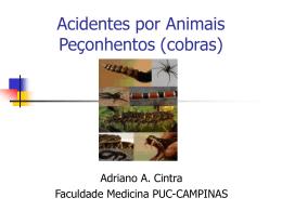 Acidentes por Animais Peçonhentos