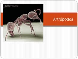 Artrópodos - Comunidades.net
