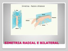 SIMETRIA RADIAL E BILATERAL