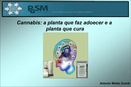 Cannabis A planta que faz adoecer e a planta que cura