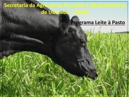 Texto explicativo sobre o programa de produção de Leite a Pasto