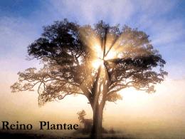 REINO PLANTAE características dos grupos