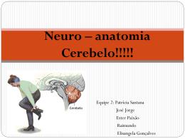 Neuro – anatomia Cerebelo