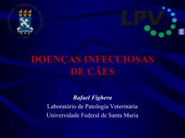 Parvovirose - Rafael Fighera