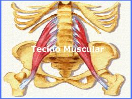 Tecidos muscular e nervoso