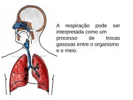 Sistema respiratório humano Função das narinas e fossas nasais