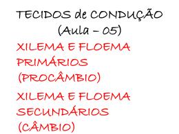XILEMA E FLOEMA SECUNDÁRIOS (CÂMBIO)