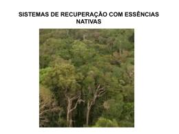 florestas secundárias