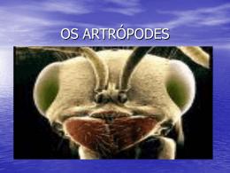 OS ARTRÓPODES - Colégio Cor Jesu