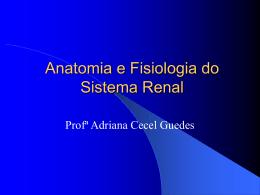 Anatomia e Fisiologia do Sistema Renal