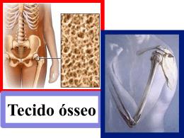 células do tecido ósseo