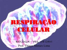Respiração Celular - 1ºs anos EM