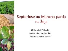 Septoriose ou Mancha