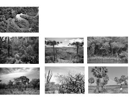 Aula 6: Vegetação – slides