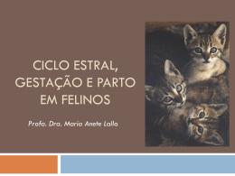 Ciclo Estral, Gestação e Parto em Felinos